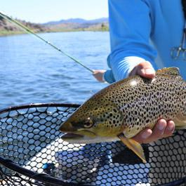 Trout fishing in the Pyrenees torrents